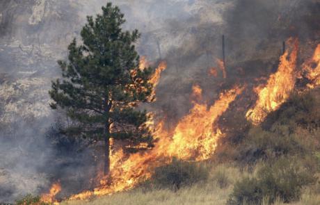 Belmont Hills on Fire
