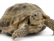 SLOW AS A TURTLE